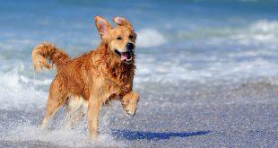 Δεν μπορείτε μακριά από το σκυλάκι σας; Αυτές είναι οι Pet Friendly παραλίες που μπορείτε να απολαύσετε το μπάνιο σας μαζί με το κατοικίδιο σας
