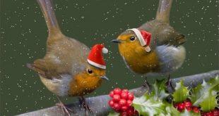 Το κελάηδημα του αηδονιού που αναγγέλλει τον ερχομό των Χριστουγέννων